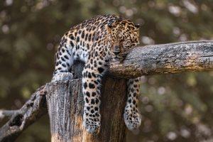 Melatonin, A Sleep Hormone with Many Uses: Part 2
