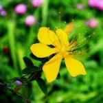Herbal Medicines for Depression