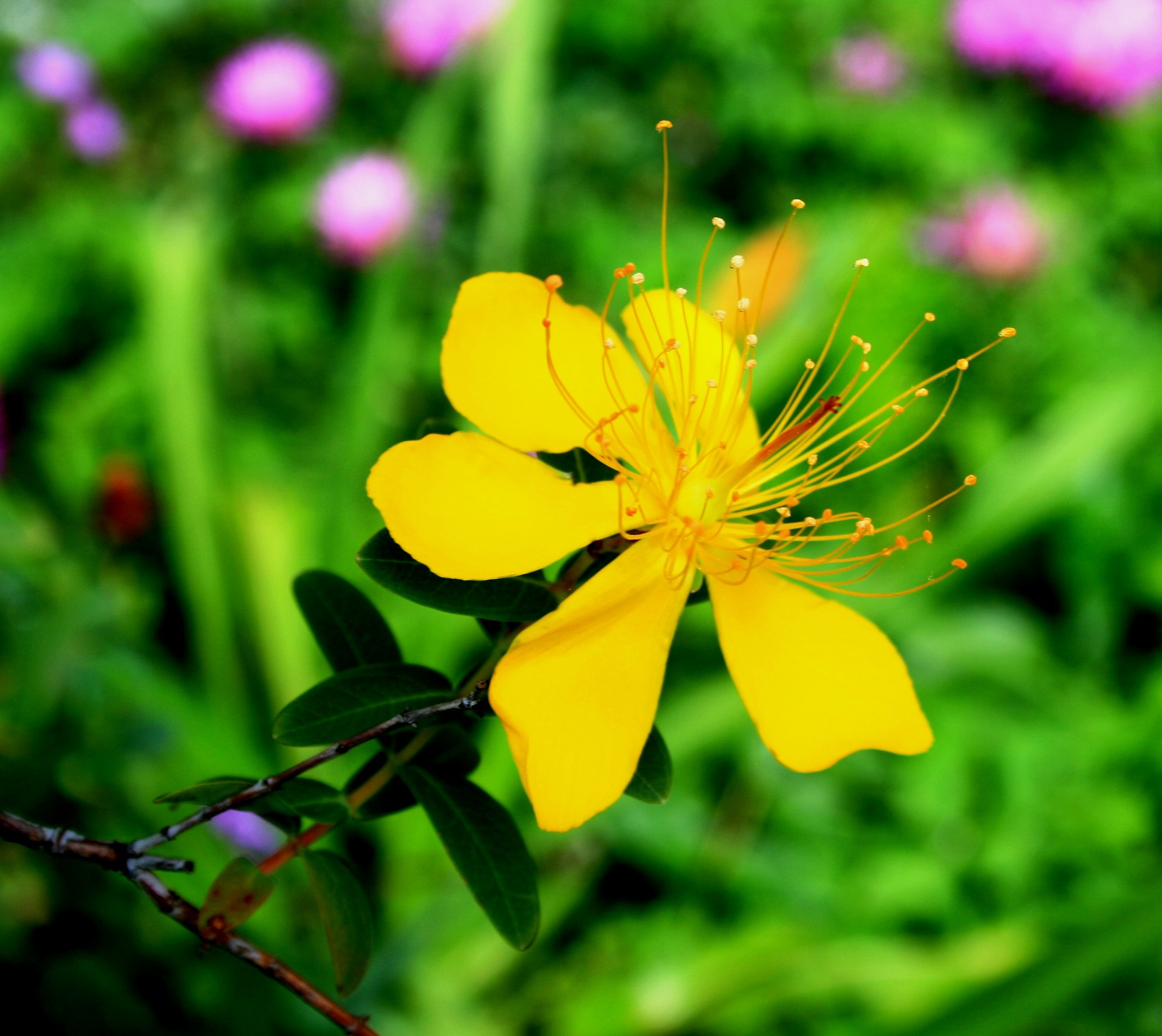 Read more about the article Herbal Medicines for Depression