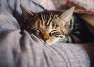Why Can't I Sleep?  Potential, Natural Treatments for Insomnia