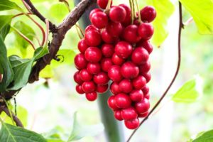 Schisandra and Cordyceps: Two Herbs that may Help with Stress and Fatigue